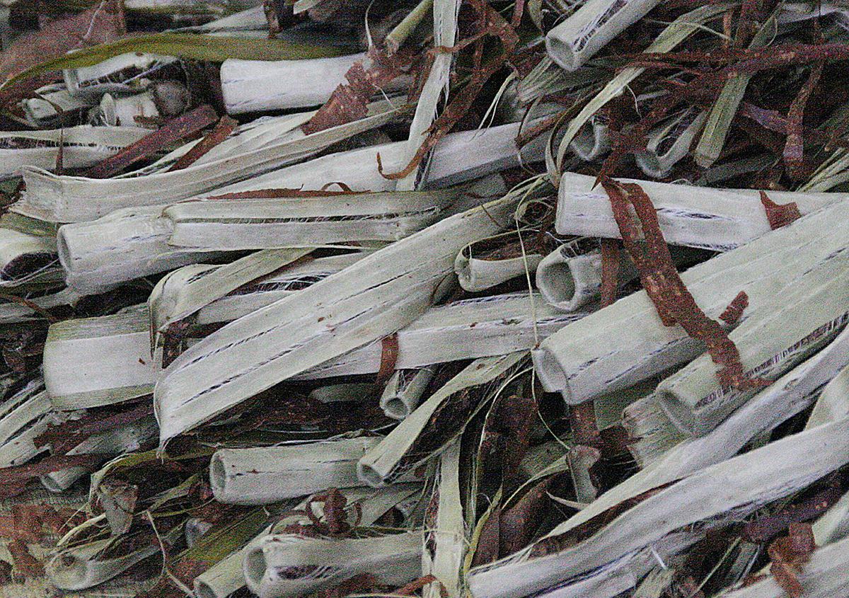 筒剝ぎ - 『樹皮が和紙になる』続:石州和紙
