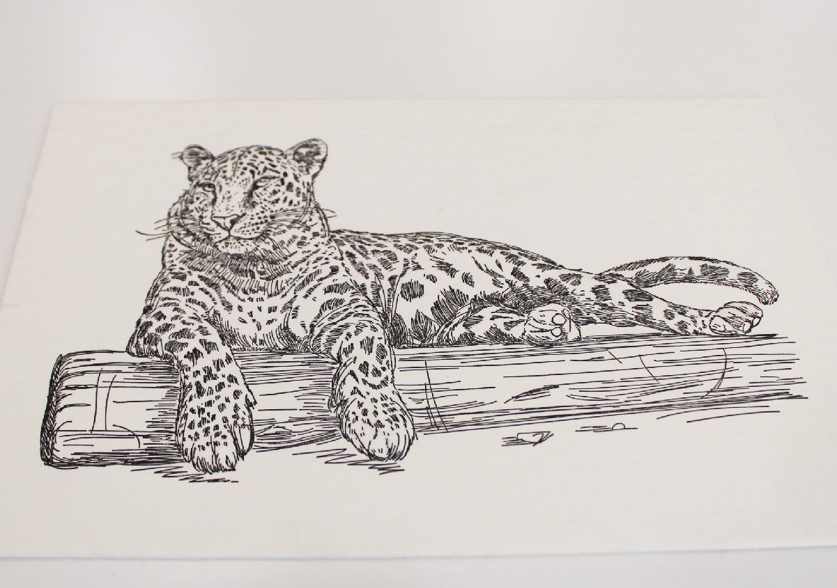 (写真8)超厚手の「WILD」に印刷された線画イラスト。エンボス(浮き上げ)加工が施されている。