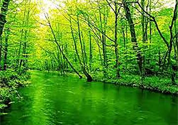色がもたらす影響や意味合い「緑」 - 三星インキ株式会社 | 活版印刷研究所
