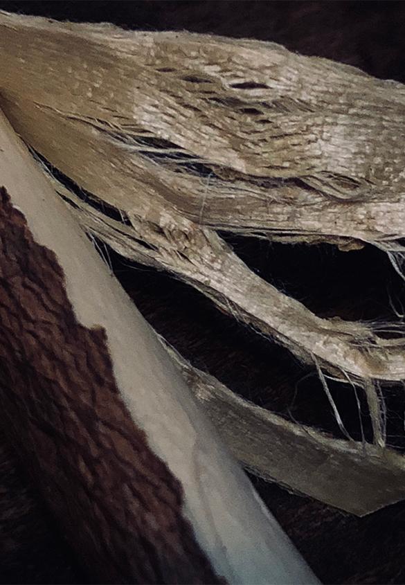 皮線維の裂け方が網目状 | 三椏紙の話 - 紙の余白 | 活版印刷研究所