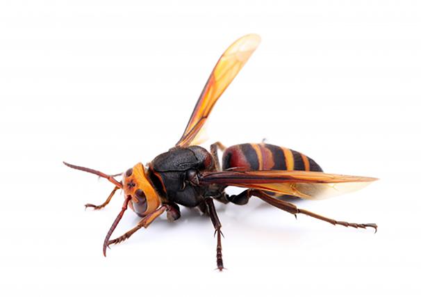 写真:ハチ | 色がもたらす影響や意味合い「 黄色 」 - 三星インキ株式会社 | 活版印刷研究所