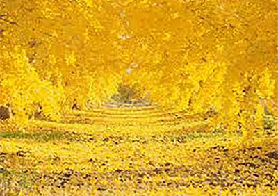 色がもたらす影響や意味合い「 黄色 」