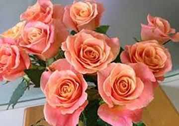 色がもたらす影響や意味合い「オレンジ と ピンク」