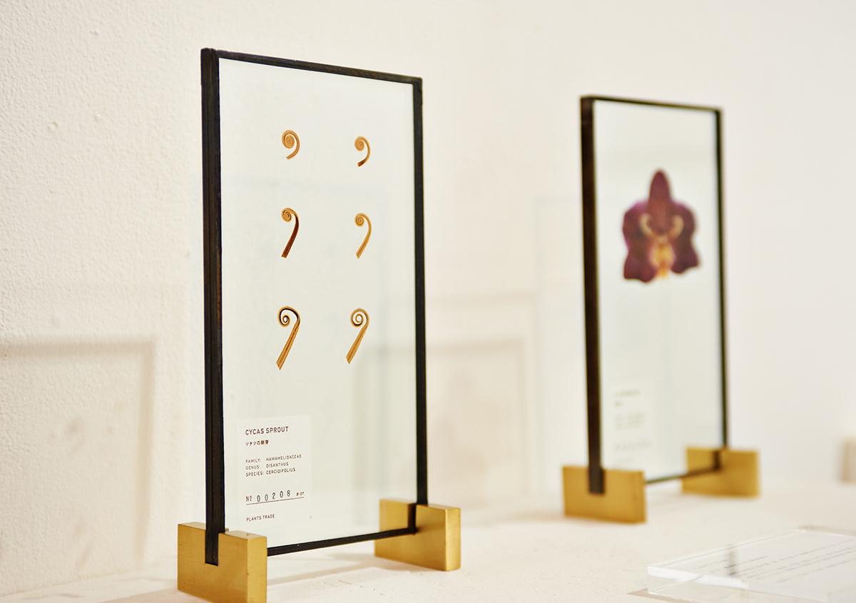 (写真3)植物の芽、花、葉などがガラスの中に封じ込まれた植物標本。室内のインテリアとしても魅力的。:撮影スズキアサコ | 個展「 植物標本と活版印刷 」を訪ねる - 生田信一(ファーインク) | 活版印刷研究所