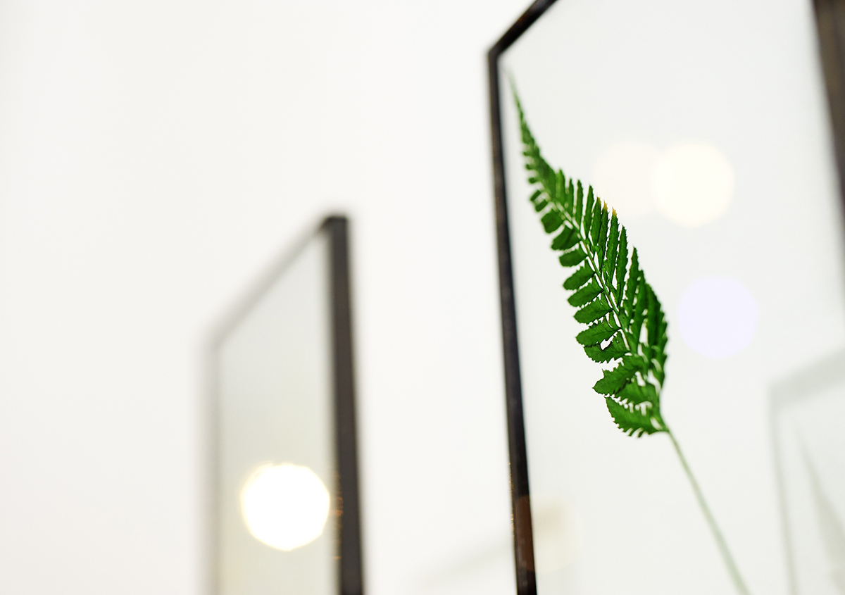 (写真4)植物の芽、花、葉などがガラスの中に封じ込まれた植物標本。室内のインテリアとしても魅力的。:撮影スズキアサコ | 個展「 植物標本と活版印刷 」を訪ねる - 生田信一(ファーインク) | 活版印刷研究所