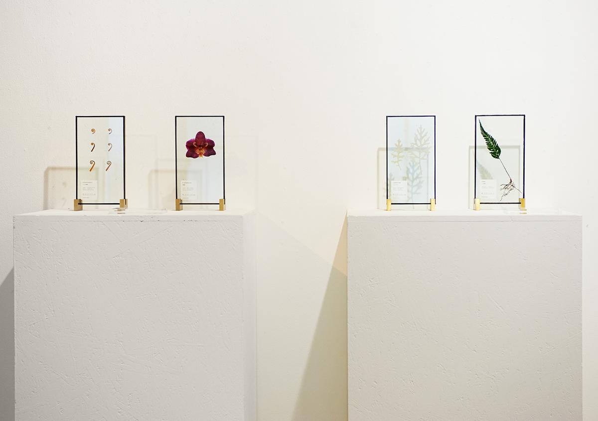 (写真5)植物の芽、花、葉などがガラスの中に封じ込まれた植物標本。室内のインテリアとしても魅力的。:撮影スズキアサコ | 個展「 植物標本と活版印刷 」を訪ねる - 生田信一(ファーインク) | 活版印刷研究所