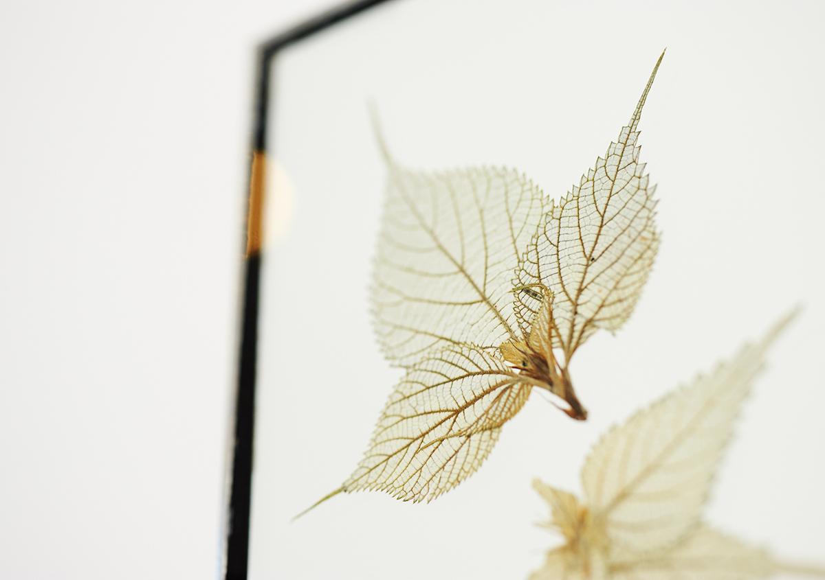 (写真7)葉の植物標本は、葉脈が織りなす独特の文様、パターンが魅力的です。紅葉で赤や黄色に変色した葉の標本も展示されていました。:撮影スズキアサコ | 個展「 植物標本と活版印刷 」を訪ねる - 生田信一(ファーインク) | 活版印刷研究所