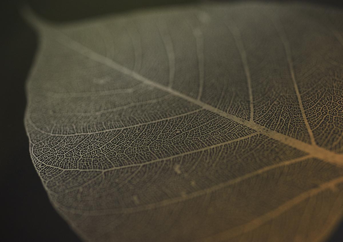 (写真8)葉の植物標本は、葉脈が織りなす独特の文様、パターンが魅力的です。紅葉で赤や黄色に変色した葉の標本も展示されていました。:撮影スズキアサコ | 個展「 植物標本と活版印刷 」を訪ねる - 生田信一(ファーインク) | 活版印刷研究所