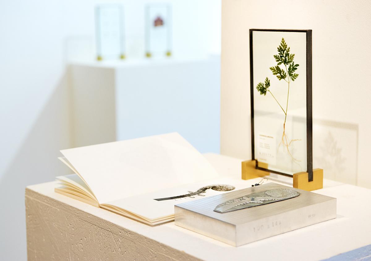 個展「 植物標本と活版印刷 」を訪ねる
