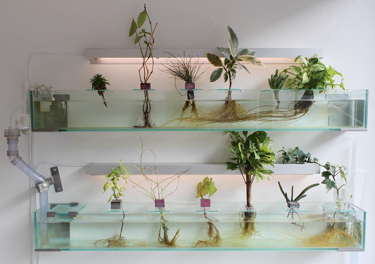 (写真1)水槽で栽培されている植物。 | 印刷カフェ Print+Plantが都立大学駅にオープン、不思議な空間を覗いてきました - 生田信一(ファーインク) | 活版印刷研究所