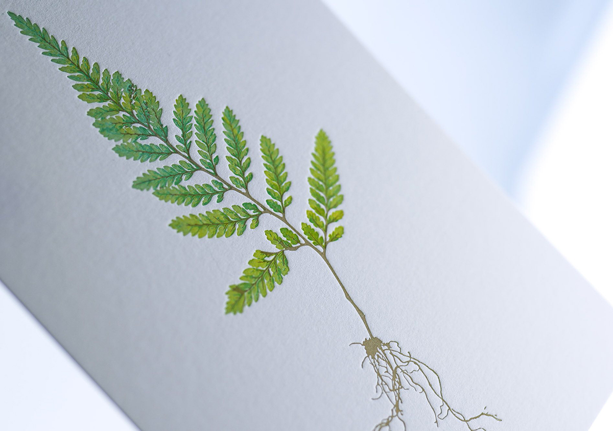 (写真12)植物の緻密なスケッチの原画を元に作られた3色刷りのカード。 | 印刷カフェ Print+Plantが都立大学駅にオープン、不思議な空間を覗いてきました - 生田信一(ファーインク) | 活版印刷研究所