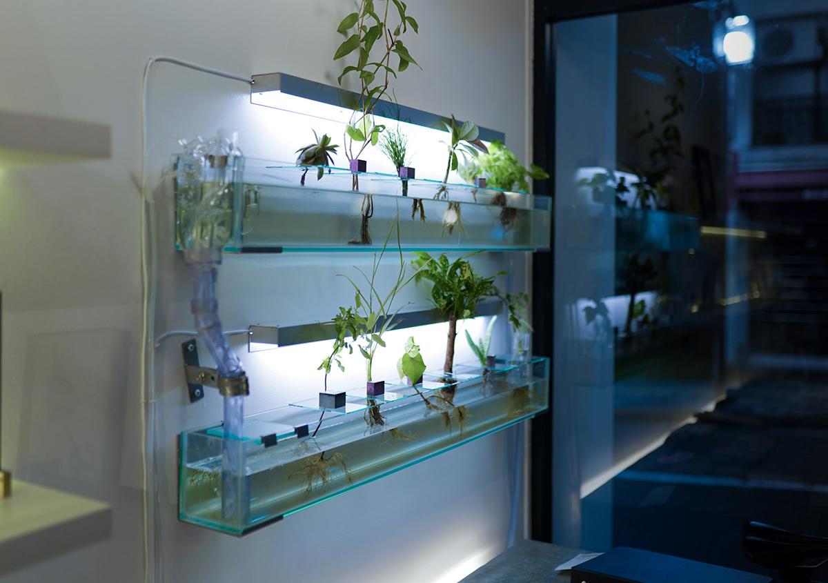 (写真3)夜には水槽もライトアップされます。 | 印刷カフェ Print+Plantが都立大学駅にオープン、不思議な空間を覗いてきました - 生田信一(ファーインク) | 活版印刷研究所