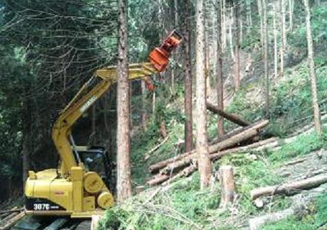 森の手入れ | 環境と紙(その2) - 平和紙業株式会社 | 活版印刷研究所