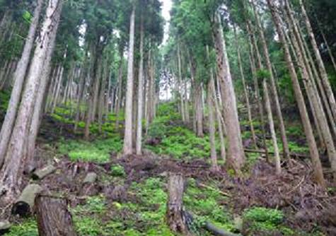 間伐後 | 環境と紙(その2) - 平和紙業株式会社 | 活版印刷研究所