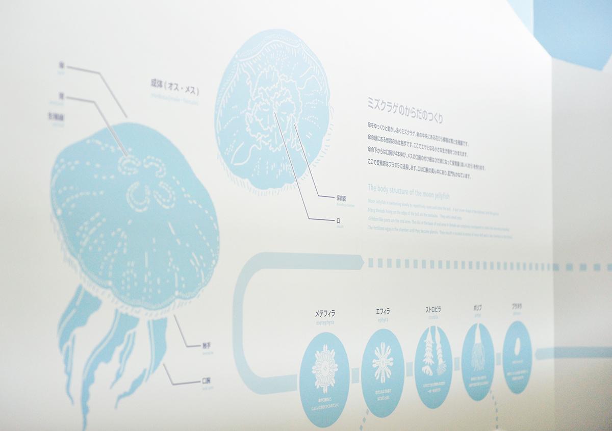 (写真32) | 葛西臨海水族園 開園30周年記念イベントで作られた 『特大!クロマグロ194mmシール』 - 生田信一(ファーインク) | 活版印刷研究所
