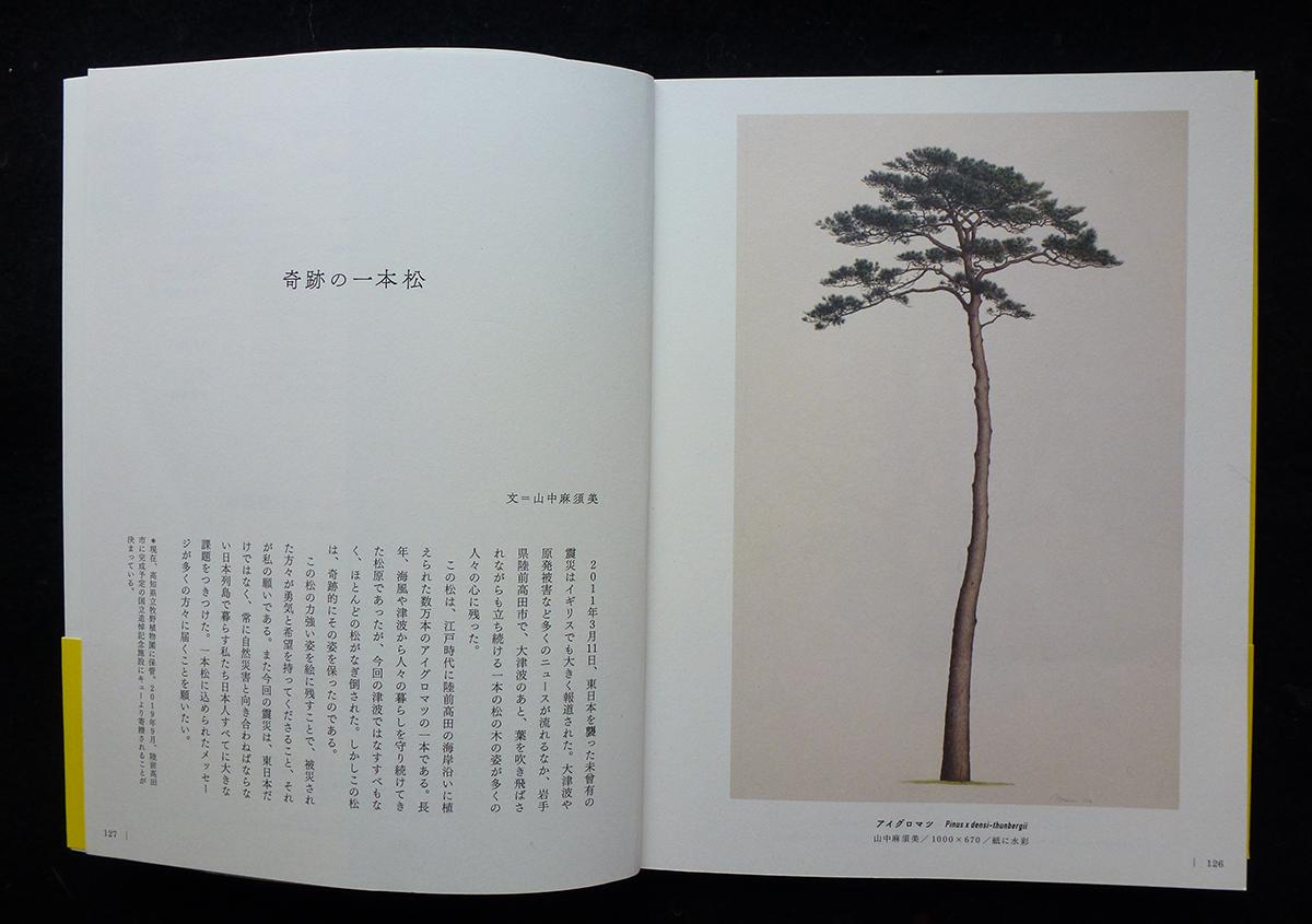 (写真2)山中さんの描かれた「奇跡の一本松」『 英国キュー王立植物園 』より | コロナ禍のイギリスとドイツからのお便り - 京都大学図書館資料保存ワークショップ | 活版印刷研究所