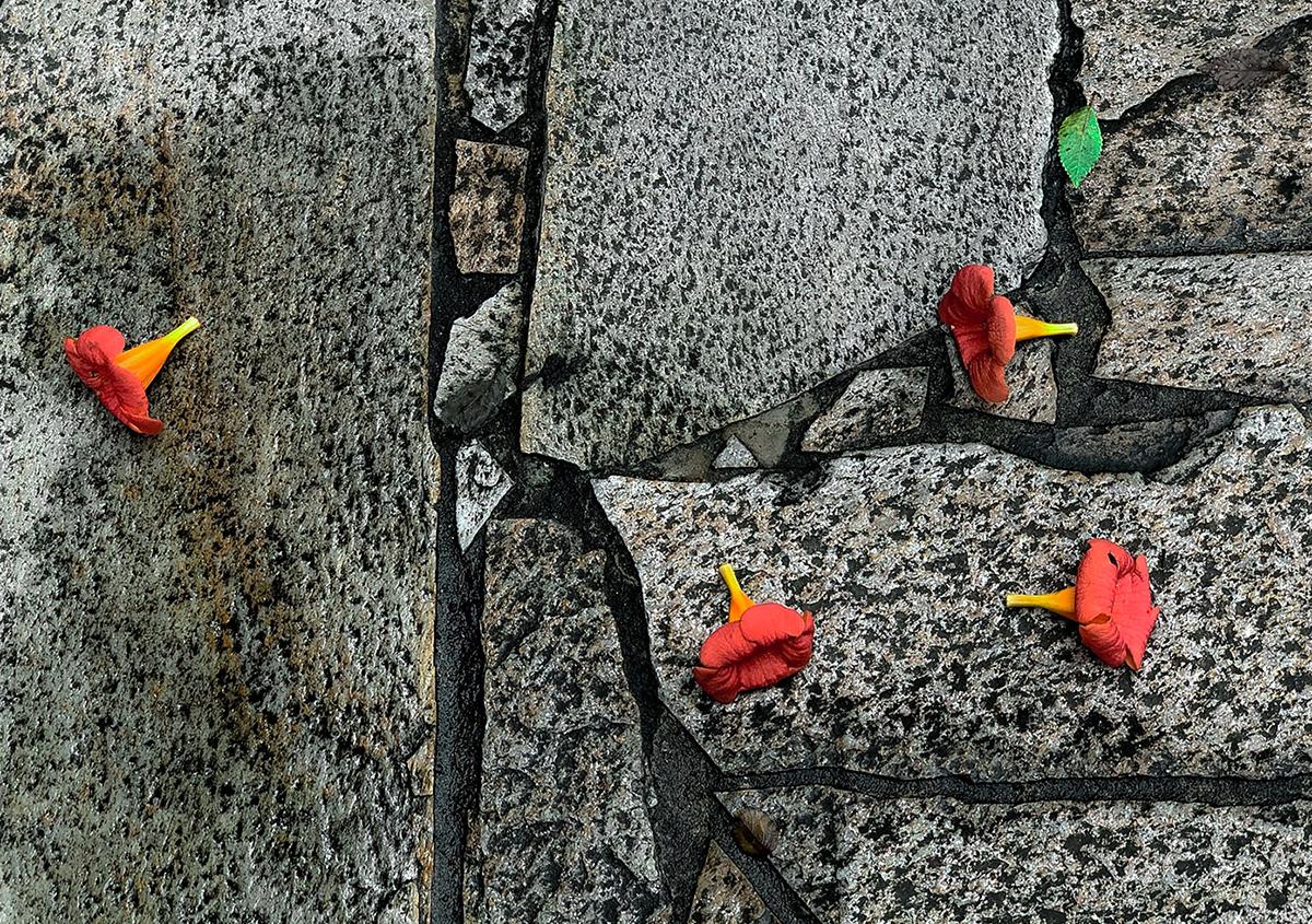 写真2 | 道道の色 - 白石奈都子 | 活版印刷研究所